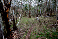 Finnis Conservation Park